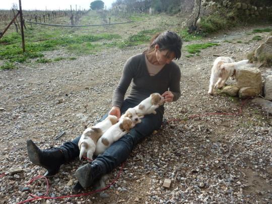 Unsere Petit Basset Griffon Vendéen Welpen aus dem A-Wurf beim Spielen in Südfrankreich