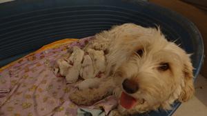 Erschöpfte Mama - schlafende Welpen